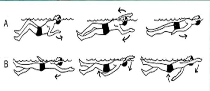 Elementary Backstroke vs Backstroke: differences and similarities